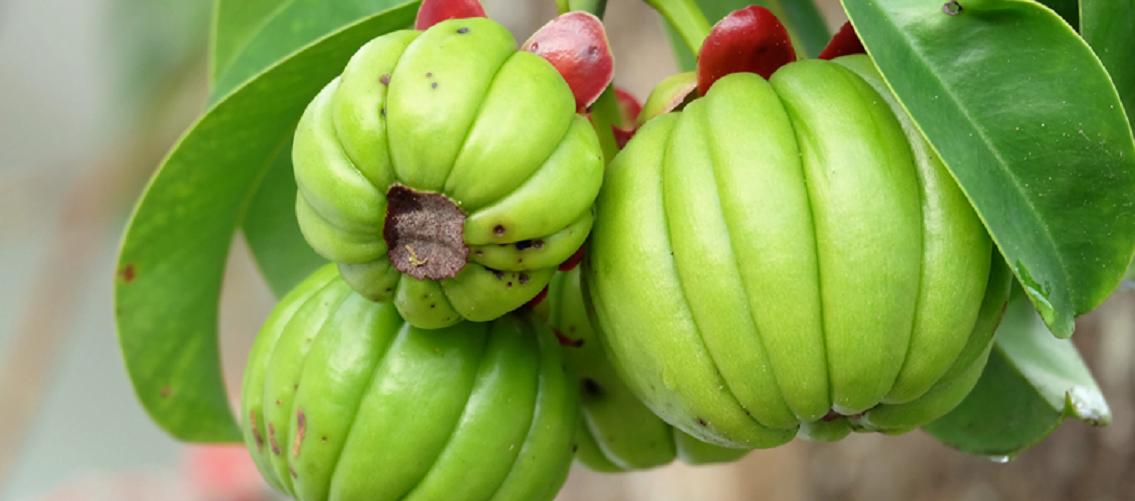 O Que E Garcinia Cambogia Nutritotal Pro