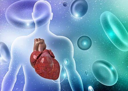 Ilustração de coração dentro de corpo humano